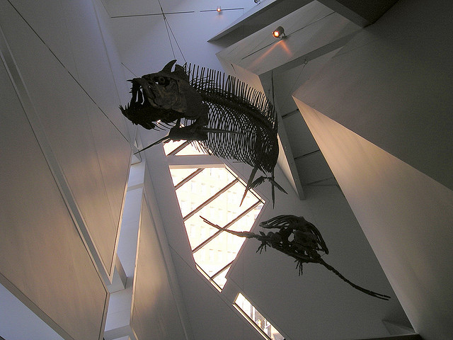 Royal Ontario Museum, Toronto, Canada - Interior 12