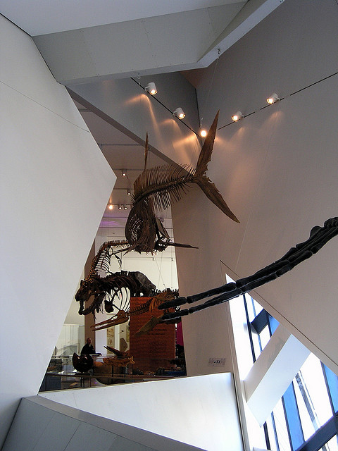 Royal Ontario Museum, Toronto, Canada - Interior 6